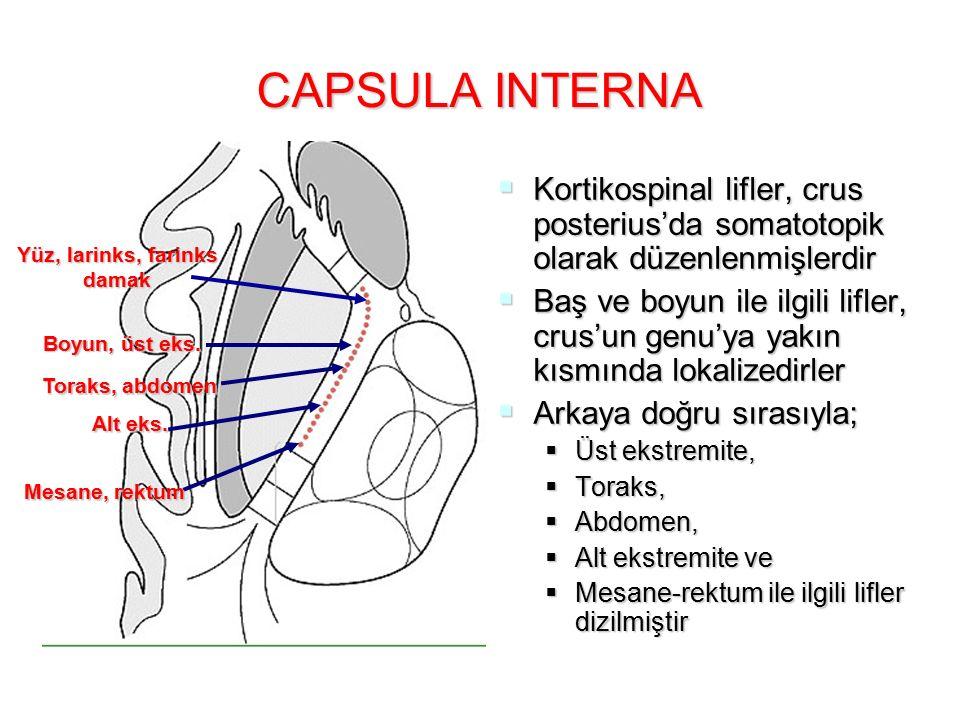 CAPSULA INTERNA  Kortikospinal lifler, crus posterius'da somatotopik olarak düzenlenmişlerdir  Baş ve boyun ile ilgili lifler, crus'un genu'ya yakın kısmında lokalizedirler  Arkaya doğru sırasıyla;  Üst ekstremite,  Toraks,  Abdomen,  Alt ekstremite ve  Mesane-rektum ile ilgili lifler dizilmiştir Yüz, larinks, farinks damak Boyun, üst eks.