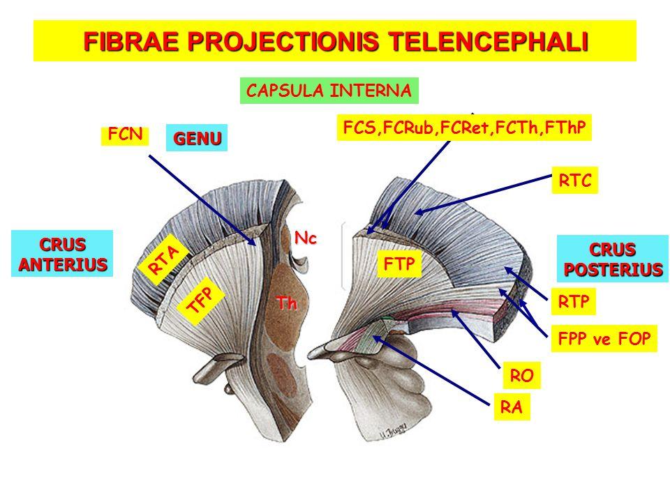 FIBRAE PROJECTIONIS TELENCEPHALI RA RO RTA Th Nc TFP FCN RTC RTP FTP FCS,FCRub,FCRet,FCTh,FThP CRUSANTERIUS CRUSPOSTERIUS GENU CAPSULA INTERNA FPP ve