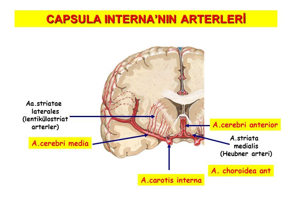 CAPSULA INTERNA'NIN ARTERLERİ A.cerebri anterior A.striata medialis (Heubner arteri) Aa.striatae laterales (lentikülostriat arterler) A.cerebri media A.carotis interna Direk dallar A.