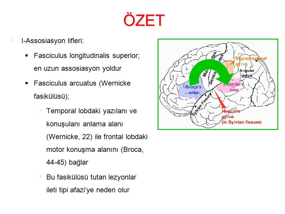 ÖZET   I-Assosiasyon lifleri:   Fasciculus longitudinalis superior; en uzun assosiasyon yoldur   Fasciculus arcuatus (Wernicke fasikülüsü);  