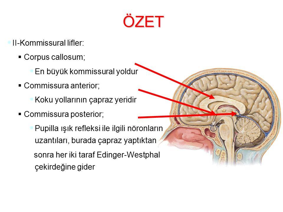 ÖZET   II-Kommissural lifler:   Corpus callosum;   En büyük kommissural yoldur   Commissura anterior;   Koku yollarının çapraz yeridir   Commissura posterior;   Pupilla ışık refleksi ile ilgili nöronların uzantıları, burada çapraz yaptıktan sonra her iki taraf Edinger-Westphal çekirdeğine gider
