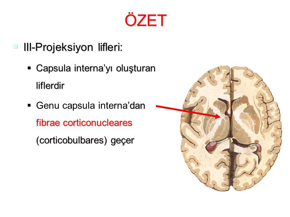 ÖZET  III-Projeksiyon lifleri:  Capsula interna'yı oluşturan liflerdir  'dan fibrae corticonucleares (corticobulbares) geçer  Genu capsula interna'dan fibrae corticonucleares (corticobulbares) geçer