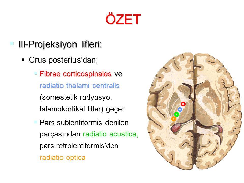 ÖZET  III-Projeksiyon lifleri:   Crus posterius'dan;  Fibrae corticospinales ve radiatio thalami centralis  Fibrae corticospinales ve radiatio th