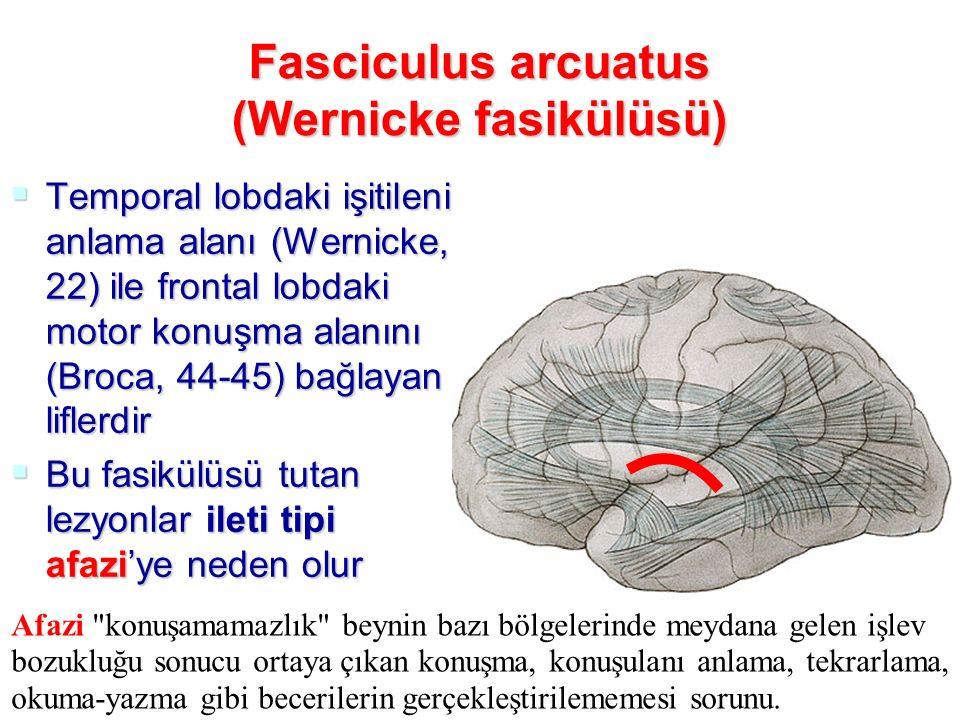 Fasciculus arcuatus (Wernicke fasikülüsü)  Temporal lobdaki işitileni anlama alanı (Wernicke, 22) ile frontal lobdaki motor konuşma alanını (Broca, 44-45) bağlayan liflerdir  Bu fasikülüsü tutan lezyonlar ileti tipi afazi'ye neden olur Afazi konuşamamazlık beynin bazı bölgelerinde meydana gelen işlev bozukluğu sonucu ortaya çıkan konuşma, konuşulanı anlama, tekrarlama, okuma-yazma gibi becerilerin gerçekleştirilememesi sorunu.