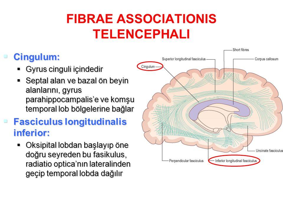 FIBRAE ASSOCIATIONIS TELENCEPHALI  Fasciculus fronto-occipitalis:  Fasciculus longitudinalis superior'un altında seyreder  Fasciculus longitudinalis superior'dan corona radiata'daki projeksiyon lifleri ile ayrılmıştır  Frontal lob ve insular korteksi, oksipital ve temporal loblara bağlar  Nucleus caudatus'un lateralindedir