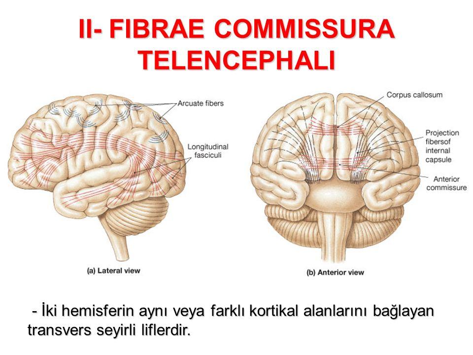 II- FIBRAE COMMISSURA TELENCEPHALI - İki hemisferin aynı veya farklı kortikal alanlarını bağlayan transvers seyirli liflerdir. - İki hemisferin aynı v