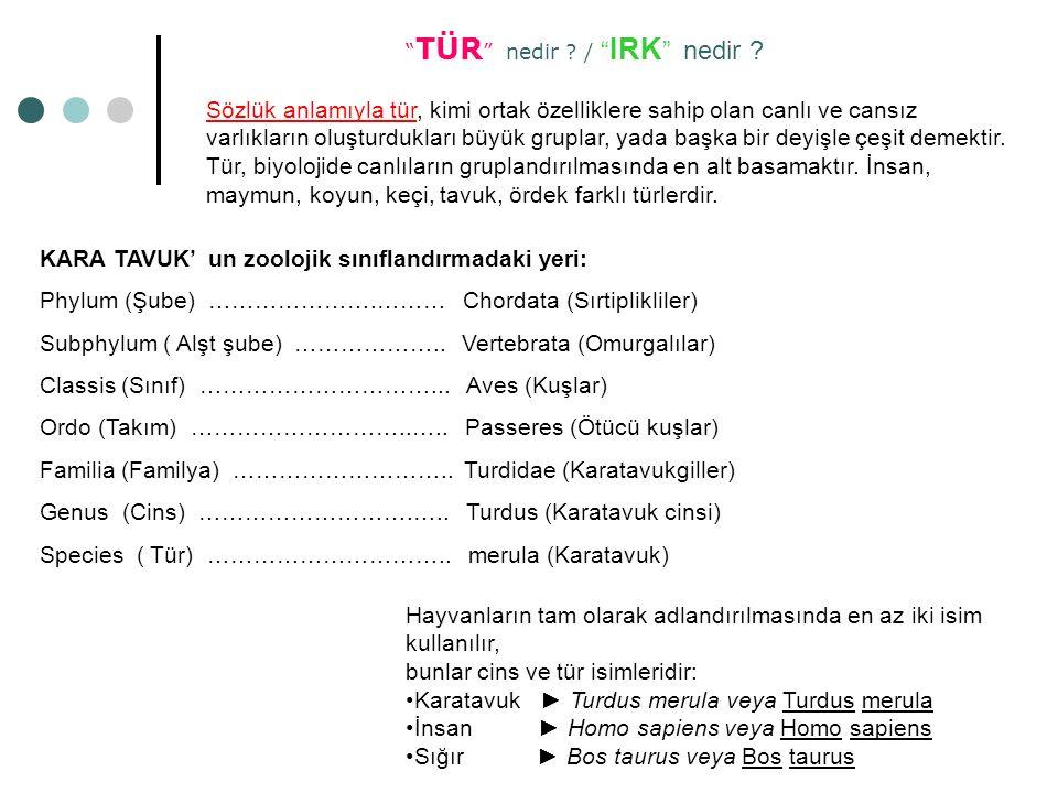 """"""" TÜR """" nedir ? / """" IRK """" nedir ? Sözlük anlamıyla tür, kimi ortak özelliklere sahip olan canlı ve cansız varlıkların oluşturdukları büyük gruplar, ya"""