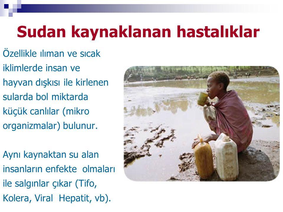 Sudan kaynaklanan hastalıklar Özellikle ılıman ve sıcak iklimlerde insan ve hayvan dışkısı ile kirlenen sularda bol miktarda küçük canlılar (mikro org