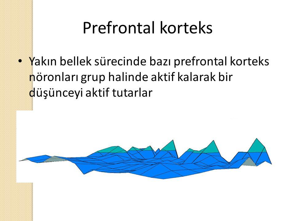 Prefrontal korteks Yakın bellek sürecinde bazı prefrontal korteks nöronları grup halinde aktif kalarak bir düşünceyi aktif tutarlar