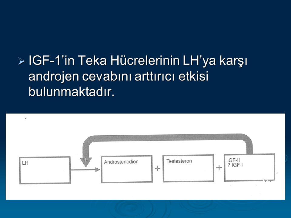  IGF-1'in Teka Hücrelerinin LH'ya karşı androjen cevabını arttırıcı etkisi bulunmaktadır.