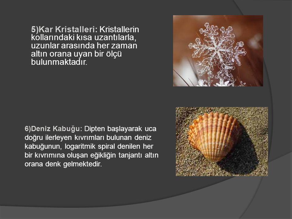 5)Kar Kristalleri: Kristallerin kollarındaki kısa uzantılarla, uzunlar arasında her zaman altın orana uyan bir ölçü bulunmaktadır.