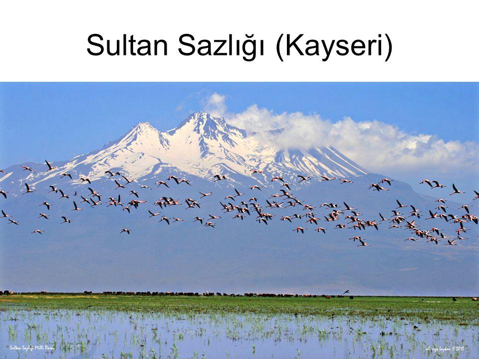 Sultan Sazlığı (Kayseri)