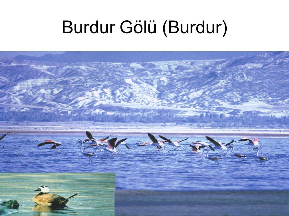 Burdur Gölü (Burdur)
