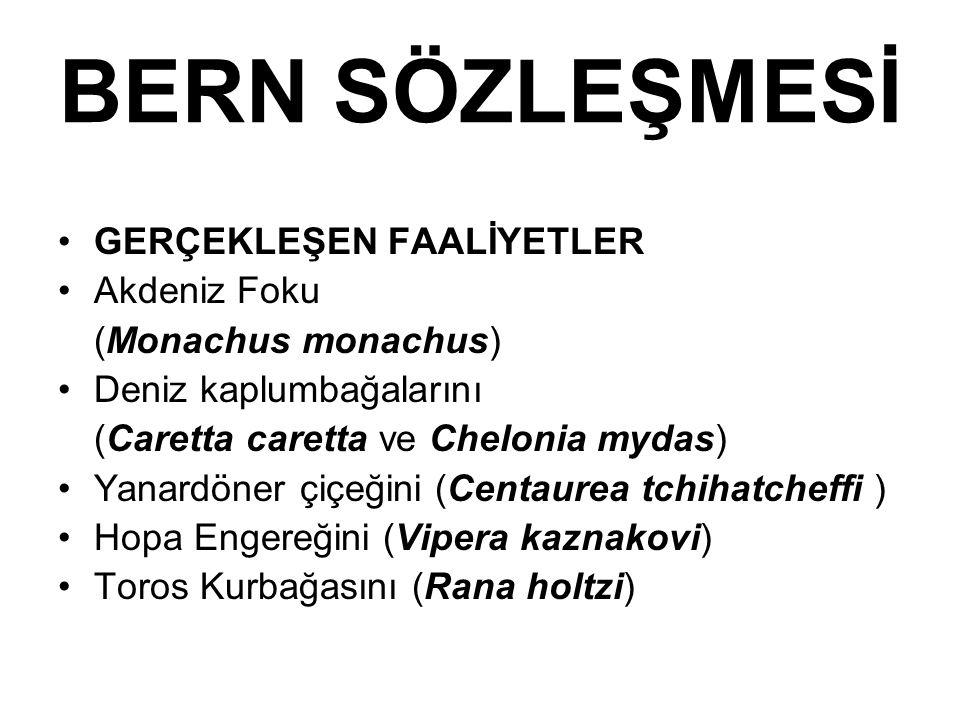 BERN SÖZLEŞMESİ GERÇEKLEŞEN FAALİYETLER Akdeniz Foku (Monachus monachus) Deniz kaplumbağalarını (Caretta caretta ve Chelonia mydas) Yanardöner çiçeğin