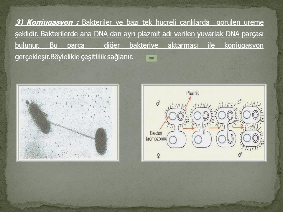 3) Konjugasyon : Bakteriler ve bazı tek hücreli canlılarda görülen üreme şeklidir. Bakterilerde ana DNA dan ayrı plazmit adı verilen yuvarlak DNA parç