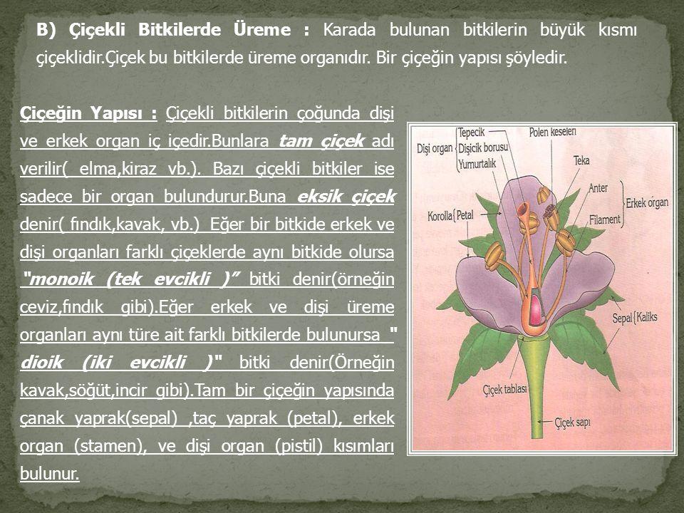 B) Çiçekli Bitkilerde Üreme : Karada bulunan bitkilerin büyük kısmı çiçeklidir.Çiçek bu bitkilerde üreme organıdır. Bir çiçeğin yapısı şöyledir. Çiçeğ