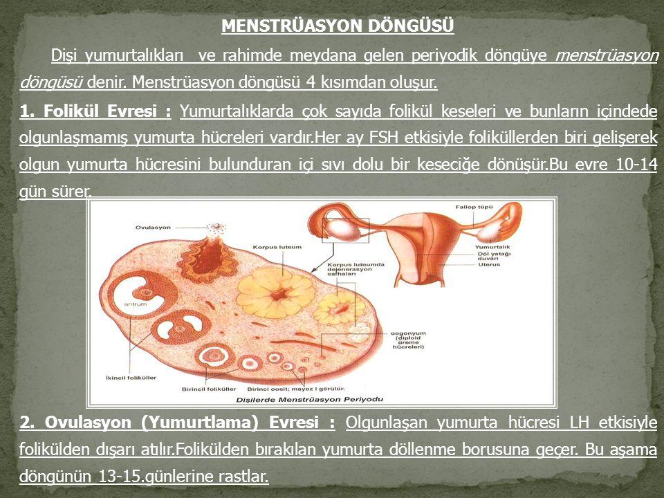 MENSTRÜASYON DÖNGÜSÜ Dişi yumurtalıkları ve rahimde meydana gelen periyodik döngüye menstrüasyon döngüsü denir. Menstrüasyon döngüsü 4 kısımdan oluşur