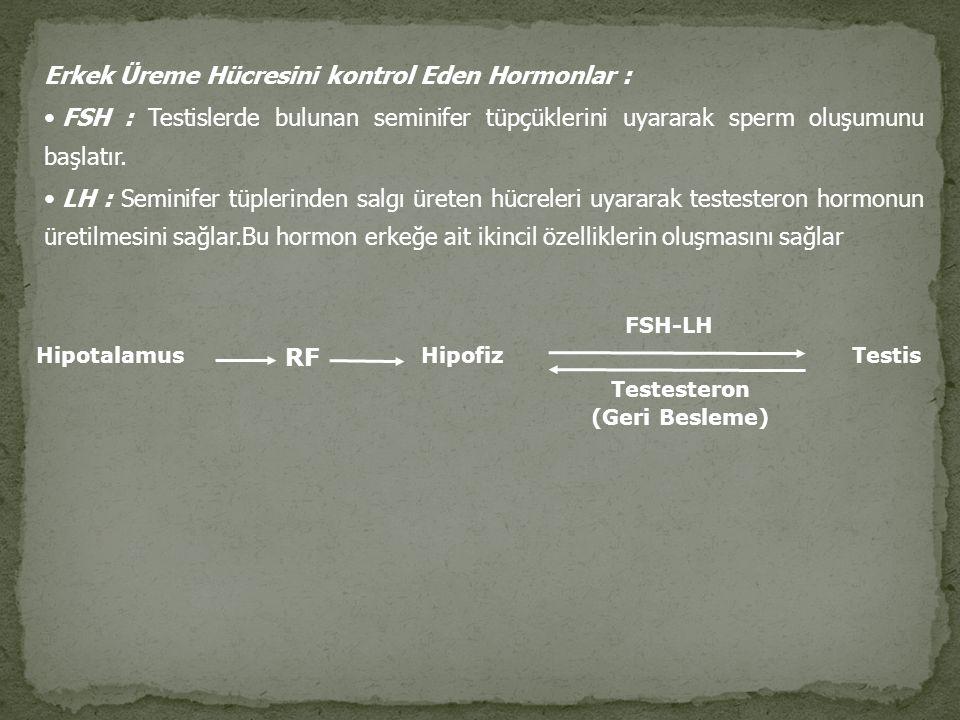 Erkek Üreme Hücresini kontrol Eden Hormonlar : FSH : Testislerde bulunan seminifer tüpçüklerini uyararak sperm oluşumunu başlatır. LH : Seminifer tüpl