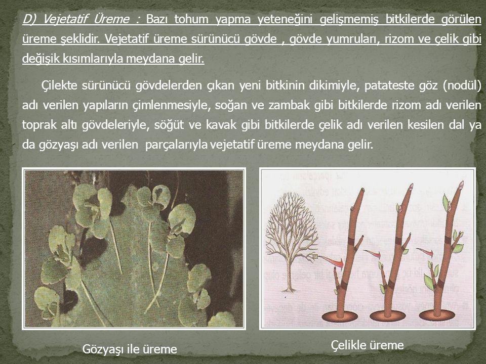 D) Vejetatif Üreme : Bazı tohum yapma yeteneğini gelişmemiş bitkilerde görülen üreme şeklidir. Vejetatif üreme sürünücü gövde, gövde yumruları, rizom