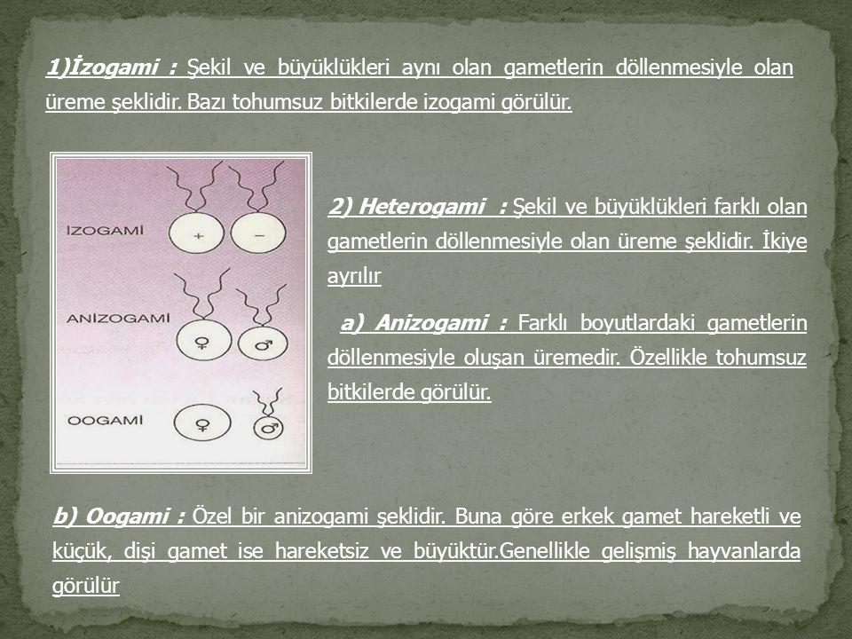 1)İzogami : Şekil ve büyüklükleri aynı olan gametlerin döllenmesiyle olan üreme şeklidir. Bazı tohumsuz bitkilerde izogami görülür. 2) Heterogami : Şe