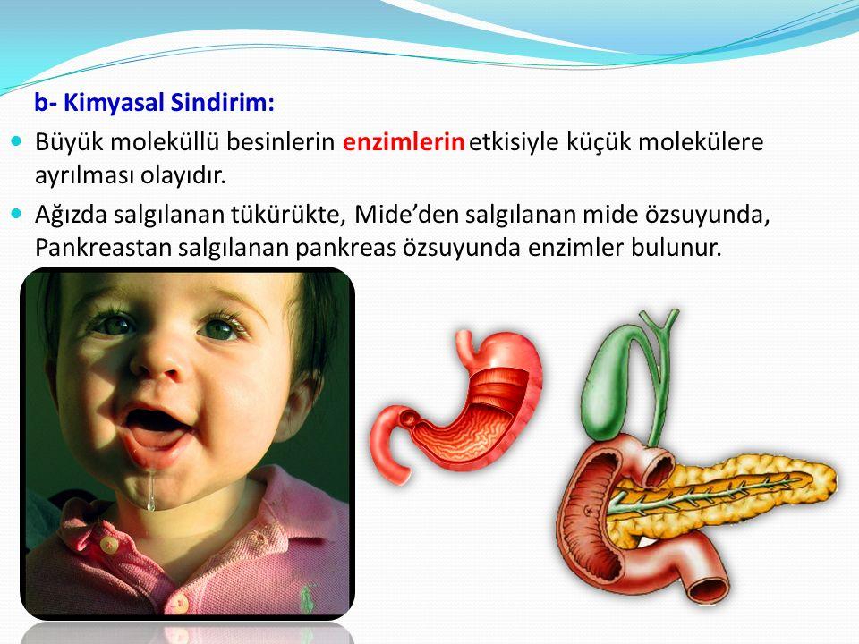 b- Kimyasal Sindirim: Büyük moleküllü besinlerin enzimlerin etkisiyle küçük molekülere ayrılması olayıdır.