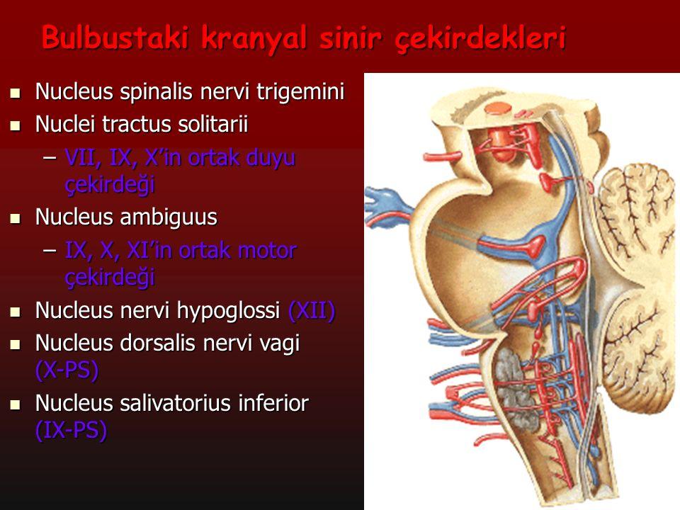 14 Bulbustaki kranyal sinir çekirdekleri Nucleus spinalis nervi trigemini Nucleus spinalis nervi trigemini Nuclei tractus solitarii Nuclei tractus sol