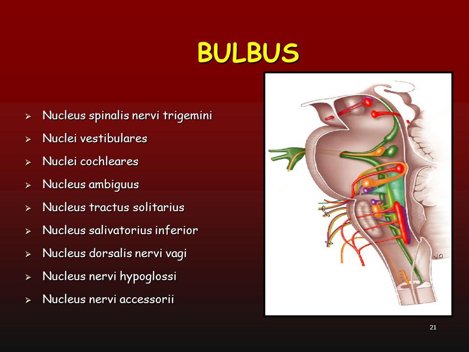 21  Nucleus spinalis nervi trigemini  Nuclei vestibulares  Nuclei cochleares  Nucleus ambiguus  Nucleus tractus solitarius  Nucleus salivatorius