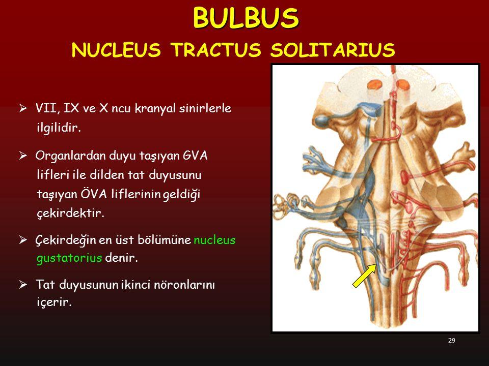 29  VII, IX ve X ncu kranyal sinirlerle ilgilidir.  Organlardan duyu taşıyan GVA lifleri ile dilden tat duyusunu taşıyan ÖVA liflerinin geldiği çeki