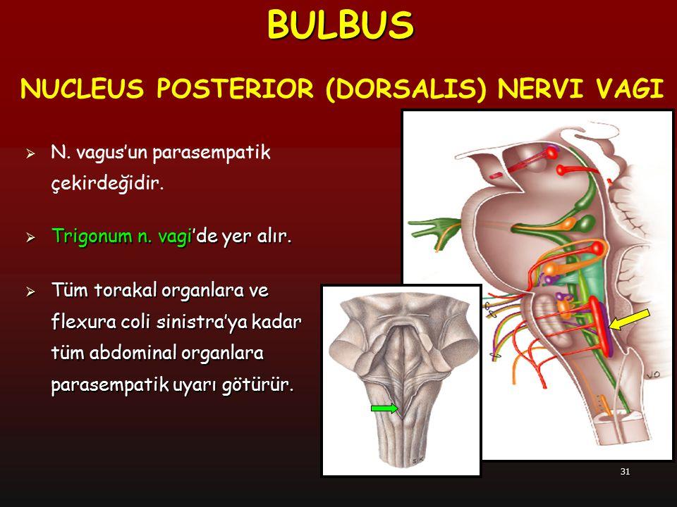 31 NUCLEUS POSTERIOR (DORSALIS) NERVI VAGI  N. vagus'un parasempatik çekirdeğidir.  Trigonum n. vagi'de yer alır.  Tüm torakal organlara ve flexura