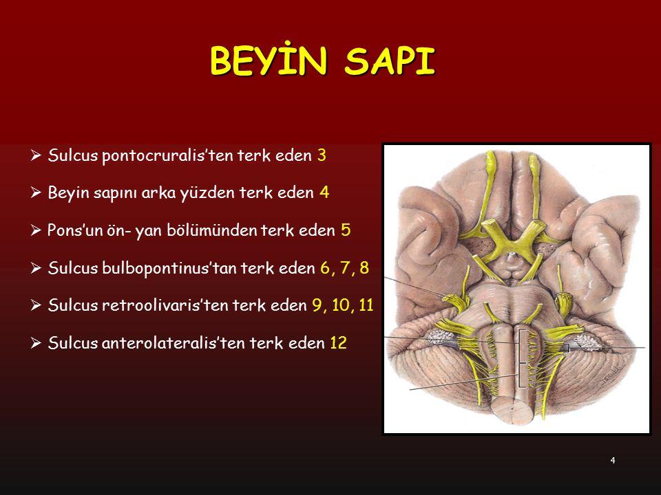4  Sulcus pontocruralis'ten terk eden 3  Beyin sapını arka yüzden terk eden 4  Pons'un ön- yan bölümünden terk eden 5  Sulcus bulbopontinus'tan te