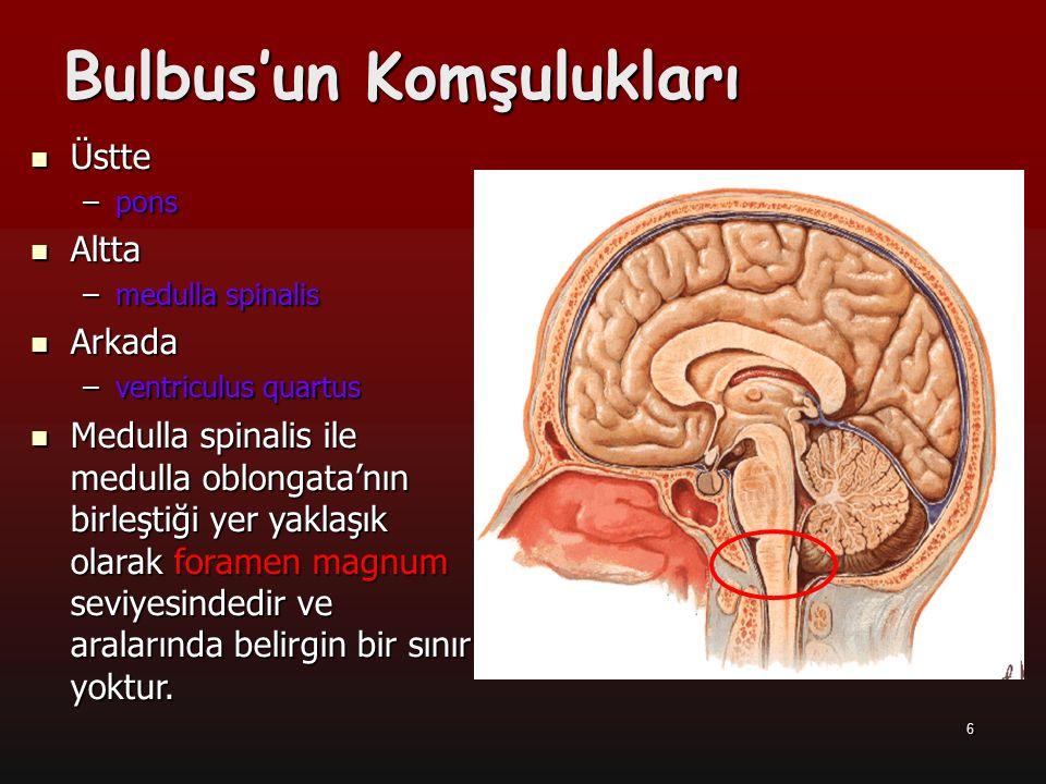 6 Bulbus'un Komşulukları Üstte Üstte –pons Altta Altta –medulla spinalis Arkada Arkada –ventriculus quartus Medulla spinalis ile medulla oblongata'nın