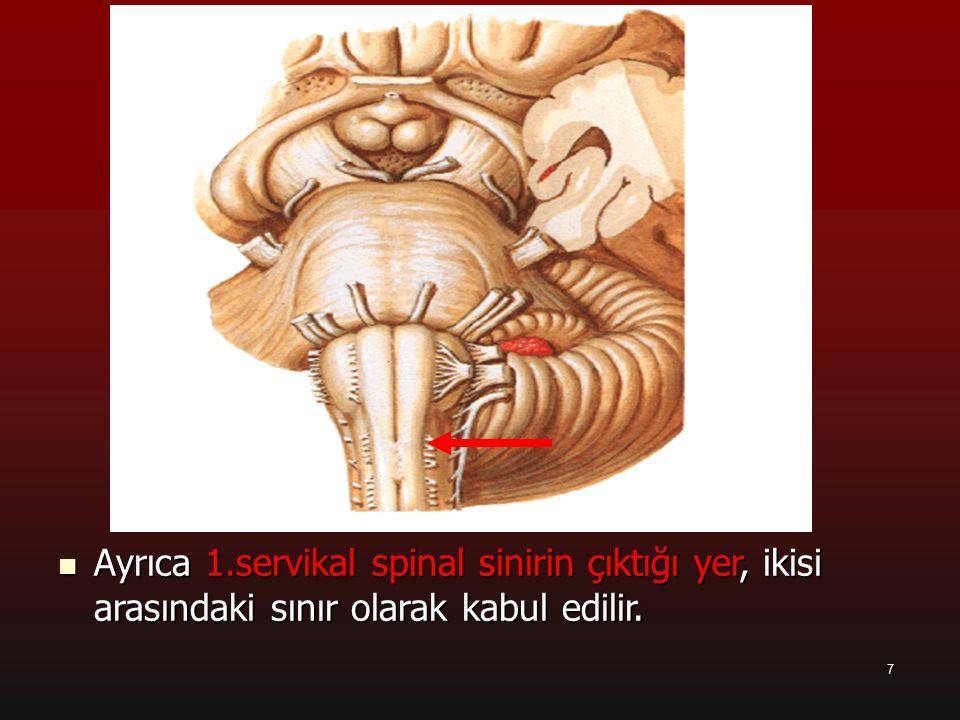 7 a Ayrıca 1.servikal spinal sinirin çıktığı yer, ikisi arasındaki sınır olarak kabul edilir. Ayrıca 1.servikal spinal sinirin çıktığı yer, ikisi aras