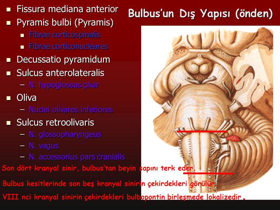 9 Bulbus'un Dış Yapısı (önden) Fissura mediana anterior Fissura mediana anterior Pyramis bulbi (Pyramis) Pyramis bulbi (Pyramis) Fibrae corticospinali