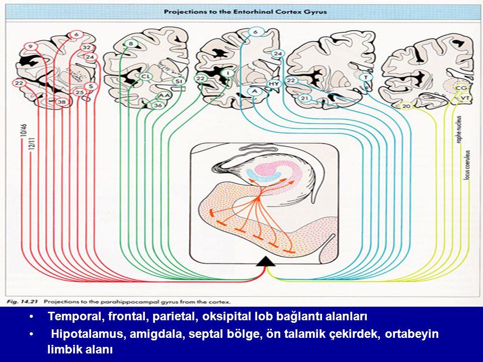 Afferent bağlantılar Temporal, frontal, parietal, oksipital lob bağlantı alanları Hipotalamus, amigdala, septal bölge, ön talamik çekirdek, ortabeyin