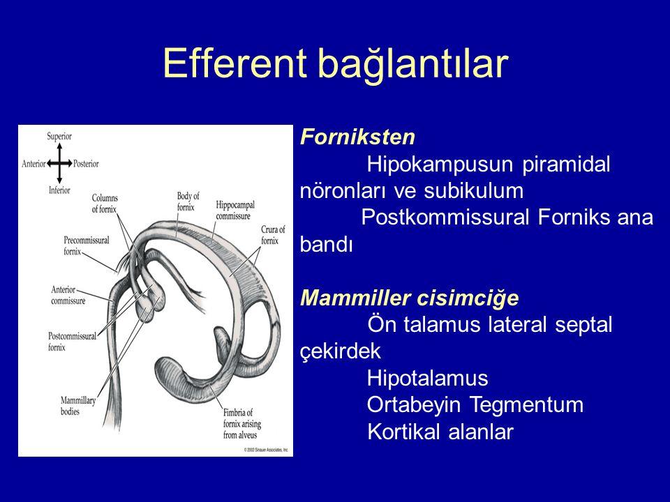 Efferent bağlantılar Forniksten Hipokampusun piramidal nöronları ve subikulum Postkommissural Forniks ana bandı Mammiller cisimciğe Ön talamus lateral