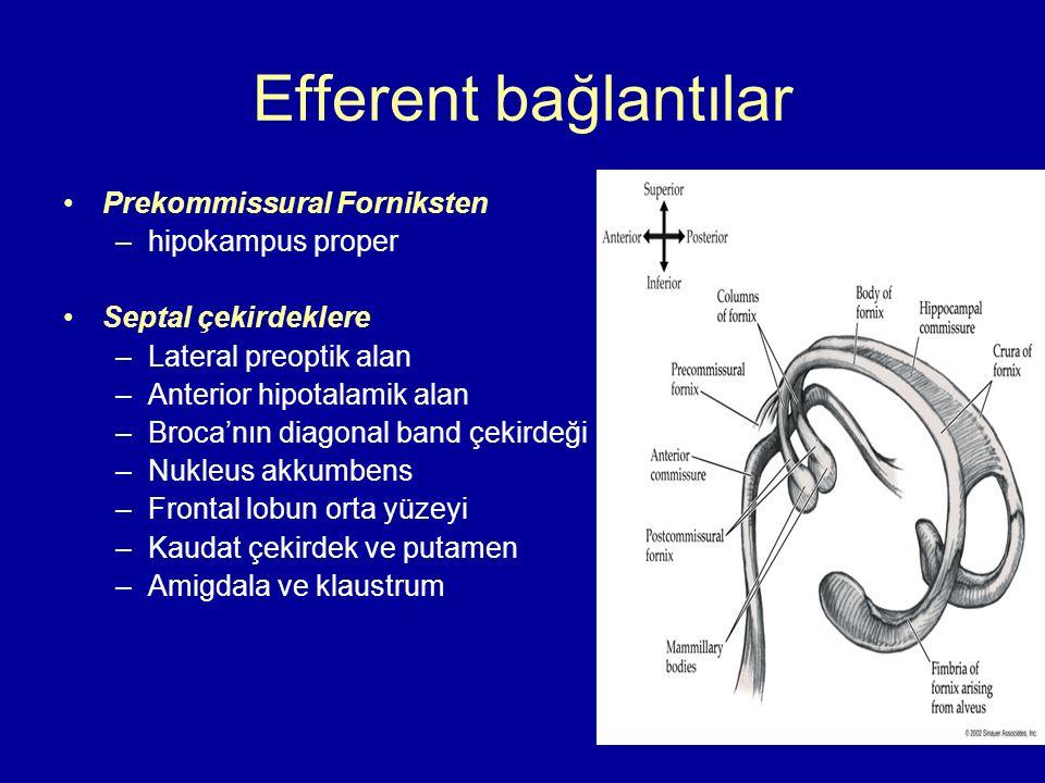 Efferent bağlantılar Prekommissural Forniksten –hipokampus proper Septal çekirdeklere –Lateral preoptik alan –Anterior hipotalamik alan –Broca'nın dia