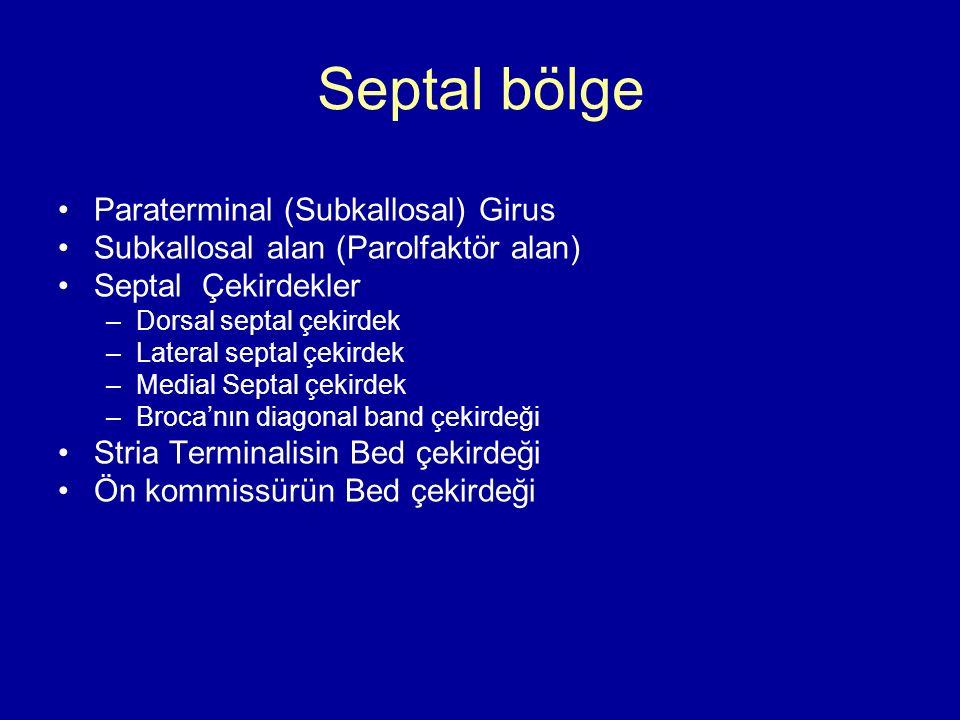 Septal bölge Paraterminal (Subkallosal) Girus Subkallosal alan (Parolfaktör alan) Septal Çekirdekler –Dorsal septal çekirdek –Lateral septal çekirdek