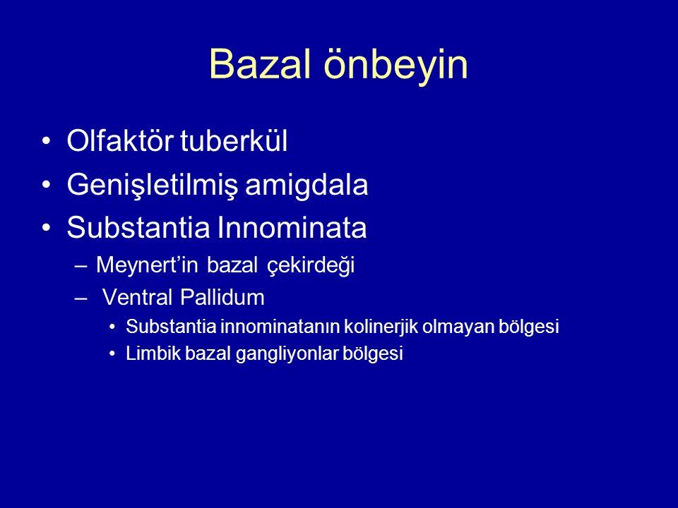 Bazal önbeyin Olfaktör tuberkül Genişletilmiş amigdala Substantia Innominata –Meynert'in bazal çekirdeği – Ventral Pallidum Substantia innominatanın k