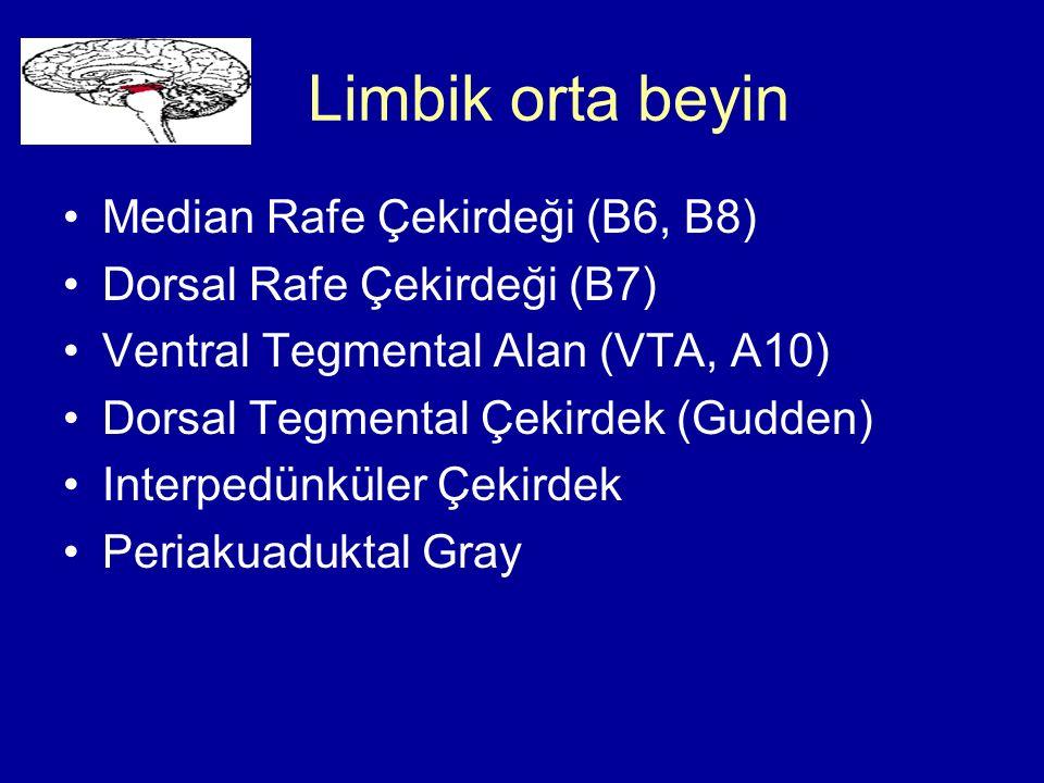 Limbik orta beyin Median Rafe Çekirdeği (B6, B8) Dorsal Rafe Çekirdeği (B7) Ventral Tegmental Alan (VTA, A10) Dorsal Tegmental Çekirdek (Gudden) Inter
