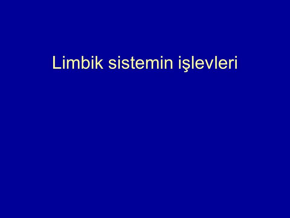 Limbik sistemin işlevleri