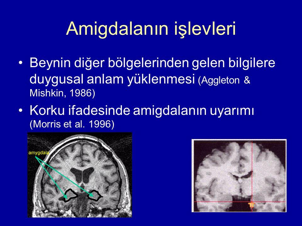 Amigdalanın işlevleri Beynin diğer bölgelerinden gelen bilgilere duygusal anlam yüklenmesi (Aggleton & Mishkin, 1986) Korku ifadesinde amigdalanın uya