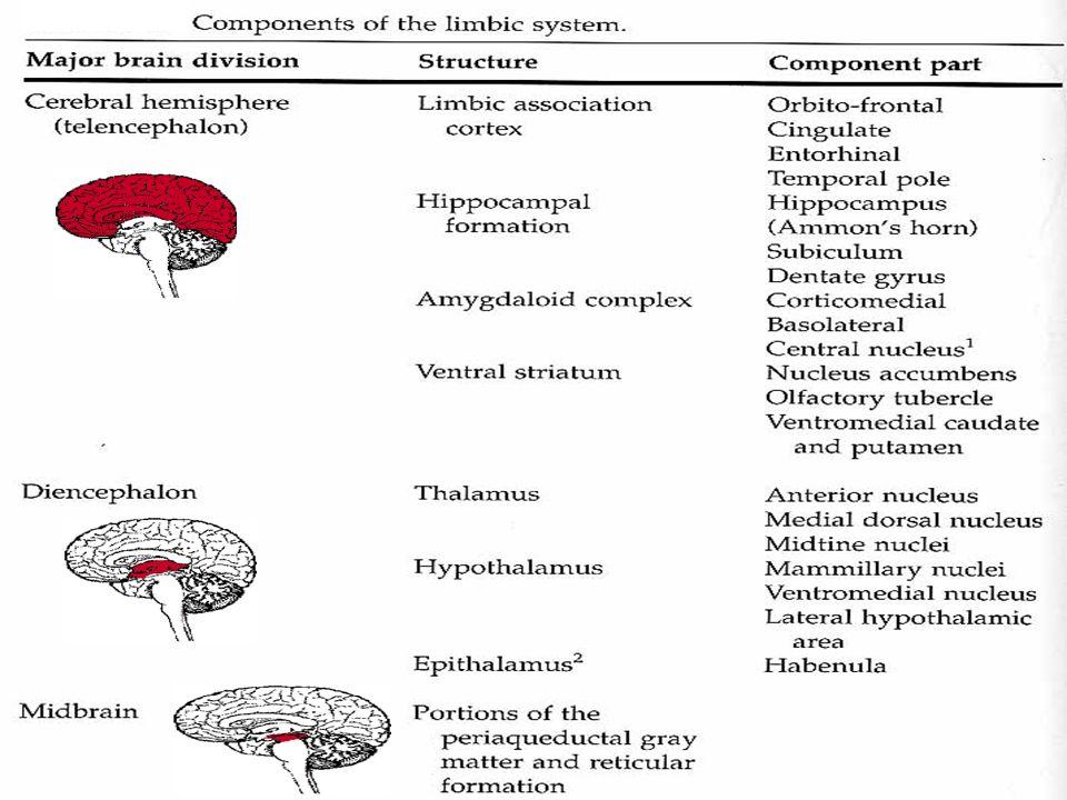 Bazal önbeyin Olfaktör tuberkül Genişletilmiş amigdala Substantia Innominata –Meynert'in bazal çekirdeği – Ventral Pallidum Substantia innominatanın kolinerjik olmayan bölgesi Limbik bazal gangliyonlar bölgesi