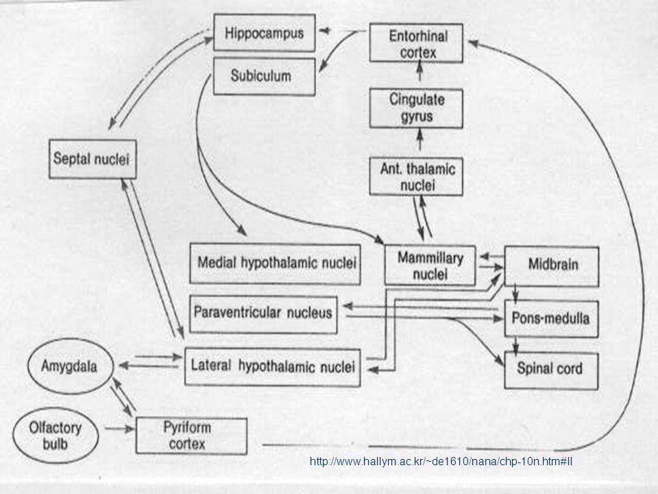 Limbik Bazal Gangliyonlar Nucleus Akkümbens Septi (Ventral Striatum) –hipokampal formasyon –amigdaloid cisim –singulat girus afferent alıp ventral palliduma efferent verir –ventral tegmental alan –dorsal rafe çekirdeğinden Ventral Pallidum – mediodorsal talamus – substantia nigra – subtalamik çekirdek efferent verir – amigdaloid çekirdek – lateral habenular çekirdeğe