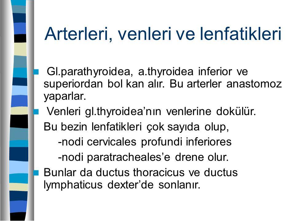Arterleri, venleri ve lenfatikleri Gl.parathyroidea, a.thyroidea inferior ve superiordan bol kan alır. Bu arterler anastomoz yaparlar. Venleri gl.thyr