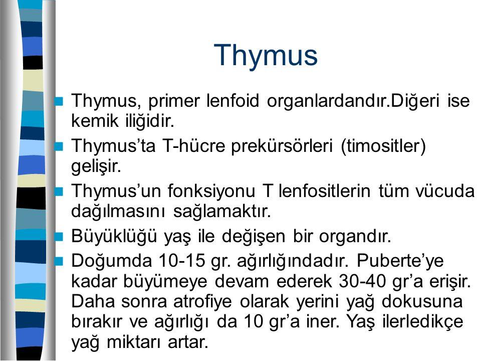 Thymus Thymus, primer lenfoid organlardandır.Diğeri ise kemik iliğidir. Thymus'ta T-hücre prekürsörleri (timositler) gelişir. Thymus'un fonksiyonu T l