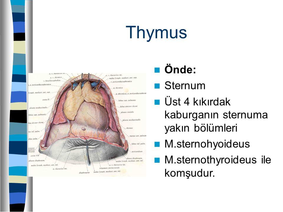 Thymus Önde: Sternum Üst 4 kıkırdak kaburganın sternuma yakın bölümleri M.sternohyoideus M.sternothyroideus ile komşudur.