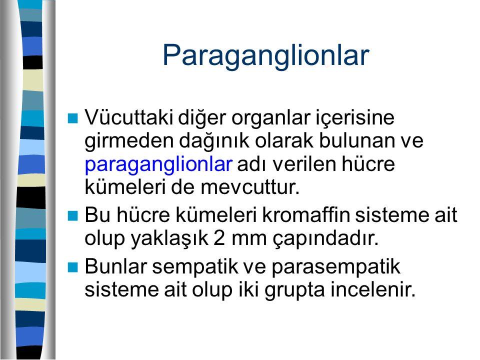 Paraganglionlar Vücuttaki diğer organlar içerisine girmeden dağınık olarak bulunan ve paraganglionlar adı verilen hücre kümeleri de mevcuttur. Bu hücr