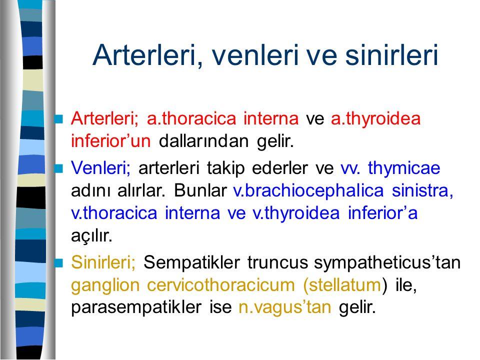 Arterleri, venleri ve sinirleri Arterleri; a.thoracica interna ve a.thyroidea inferior'un dallarından gelir. Venleri; arterleri takip ederler ve vv. t