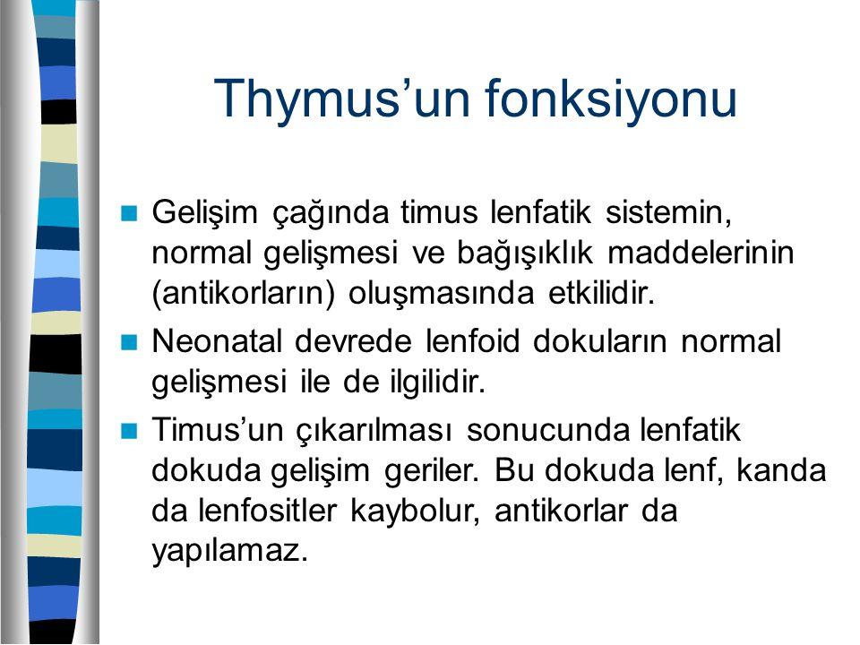 Thymus'un fonksiyonu Gelişim çağında timus lenfatik sistemin, normal gelişmesi ve bağışıklık maddelerinin (antikorların) oluşmasında etkilidir. Neonat
