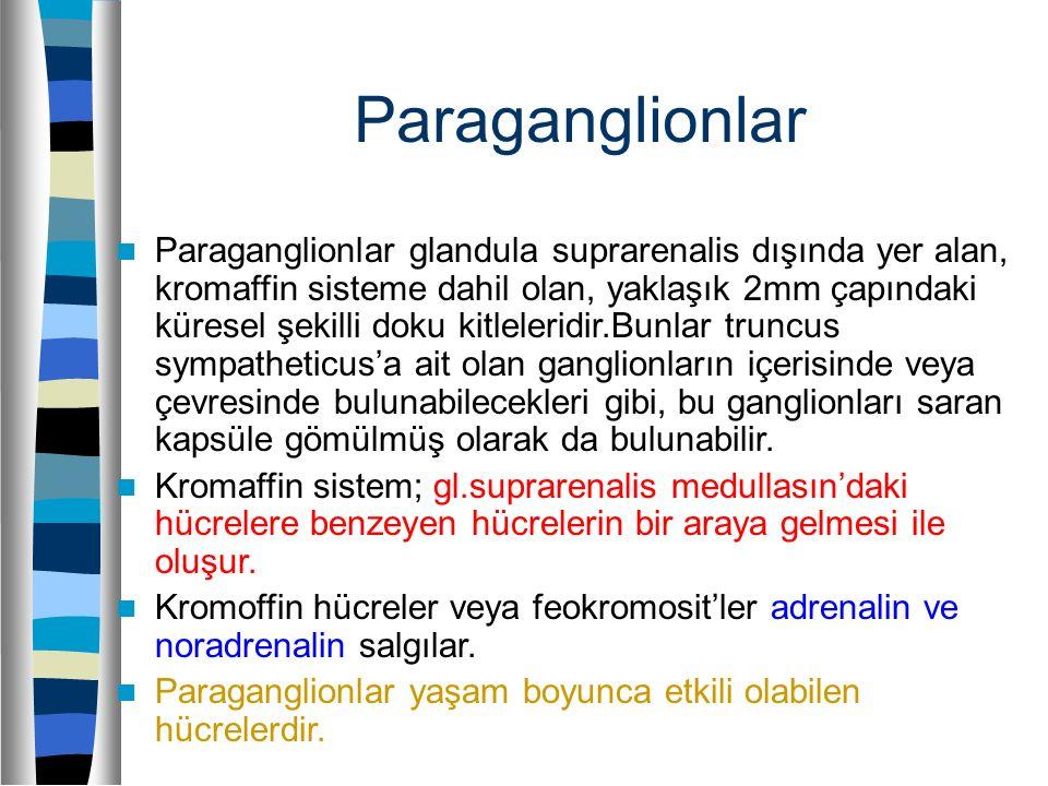 Paraganglionlar Paraganglionlar glandula suprarenalis dışında yer alan, kromaffin sisteme dahil olan, yaklaşık 2mm çapındaki küresel şekilli doku kitl